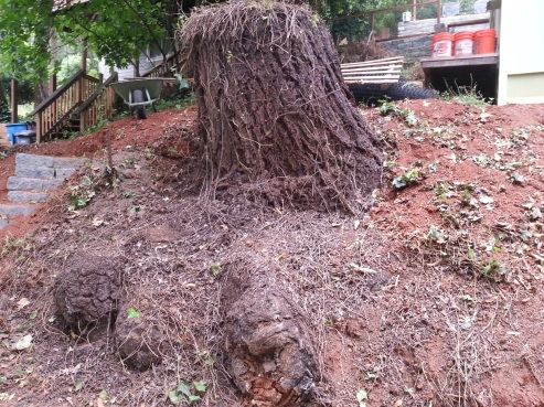the fir stump fully exposed