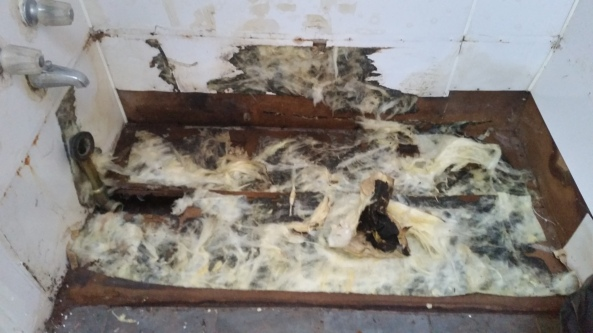 moldy insulation under the tub